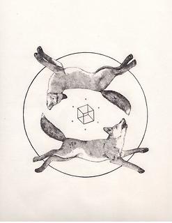 ardilla y castor